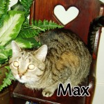 max-001-copy