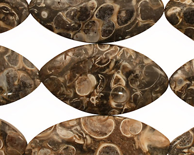 Turritella Agate Horse Eye 26-37x13-19mm