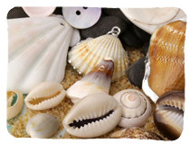 Shell Charms & Pendants